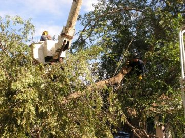 Tree removal service cherry picker