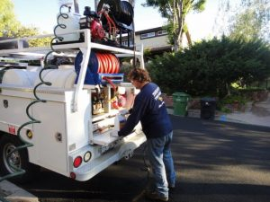 Tree Service, Diagnosis, and Treatment