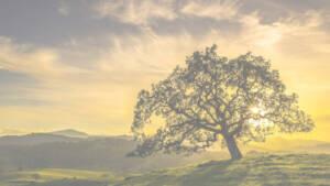Tree Behind Sunset, Background main image